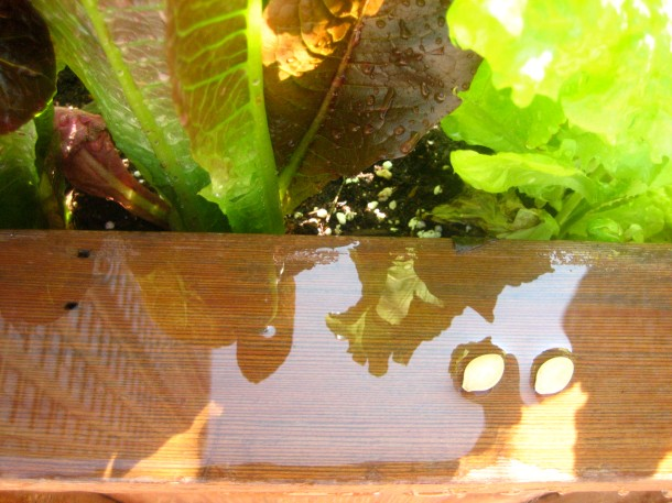 Reflections on My High-rise Planter with Two Zucchini Seeds