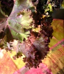 Red Kale Overlay