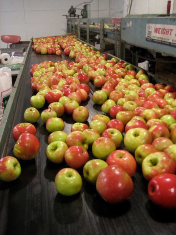 Applepaloosa of Apples Being Made Into Cider