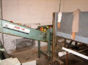 Arm and Leg Hanging from Cider Machine