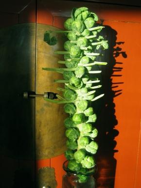 Brussel Sprout Log Lime-MapleGlaze